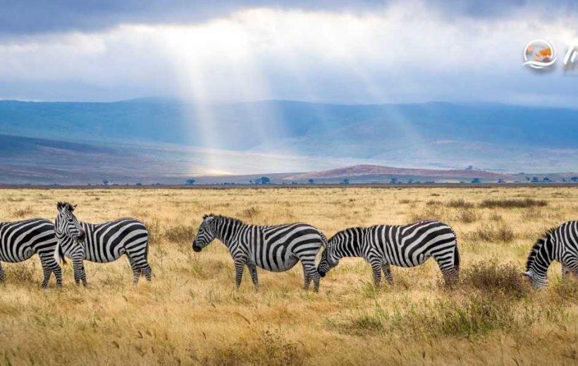 Discover Kenya in 07 Days